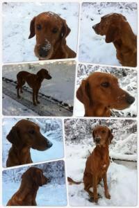 pips in sneeuw